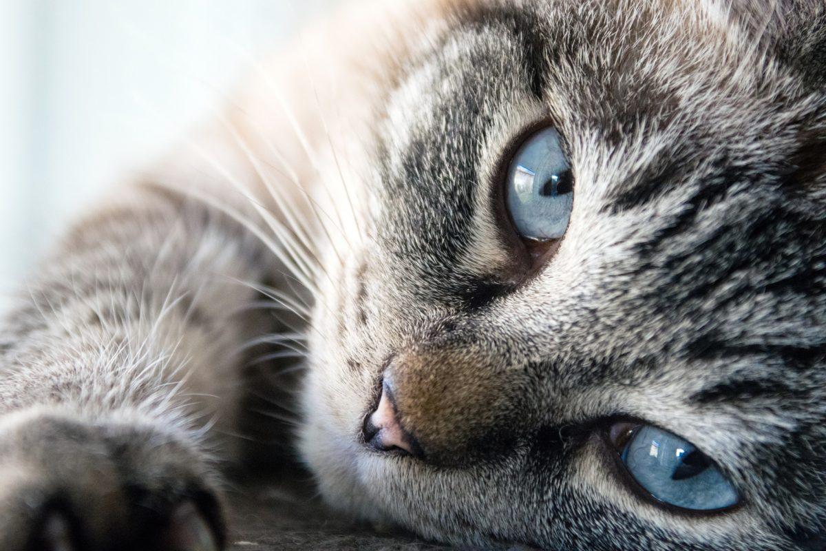 cat-3062647_1920-1200x800.jpg
